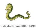 일러스트, 동물, 뱀 80663499