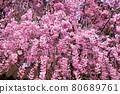 spring, bloom, blossom 80689761