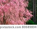 spring, cherry blossom, cherry tree 80689894