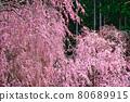 spring, bloom, blossom 80689915
