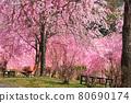 spring, cherry blossom, cherry tree 80690174