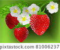 strawberry vector illustration 81006237