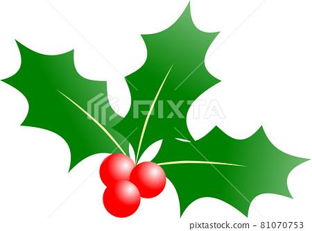 서양 호랑 가시 나무 크리스마스 소재 81070753