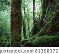 야쿠시마의 숲 81398372