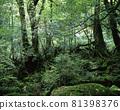 야쿠시마의 숲 81398376