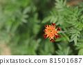 꽃 81501687