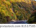 autumn, autumnal, maple 81537585