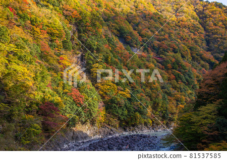 From the train window in Japan, Oigawa Railway Ikawa Line in autumn colors 81537585