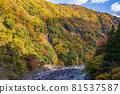 oigawa railway, autumn, autumnal 81537587