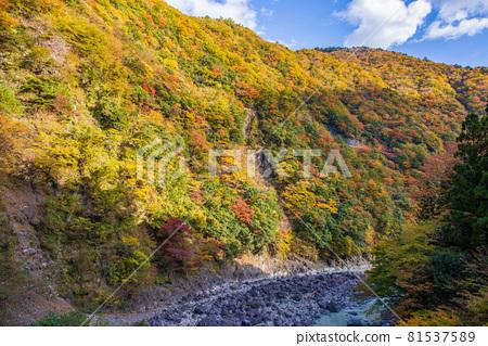 From the train window in Japan, Oigawa Railway Ikawa Line in autumn colors 81537589