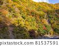oigawa railway, autumn, autumnal 81537591