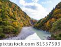 autumn, autumnal, maple 81537593