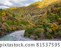 autumn, autumnal, maple 81537595