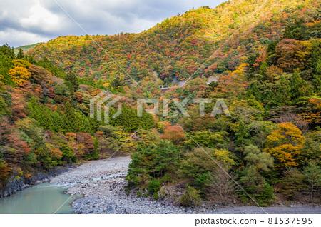 From the train window in Japan, Oigawa Railway Ikawa Line in autumn colors 81537595