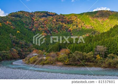 From the train window in Japan, Oigawa Railway Ikawa Line in autumn colors 81537601