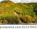 autumn, autumnal, maple 81537603