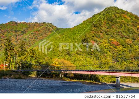 From the train window in Japan, the autumn leaves of the Oigawa Railway Ikawa Line, Ryogokutsuri Bridge 81537754