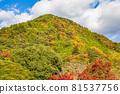 autumn, autumnal, maple 81537756