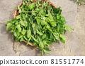採摘葉子染鮮靛藍葉 81551774