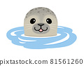 A seal that makes a face out of the water 81561260