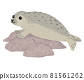 Seals on the rock 81561262