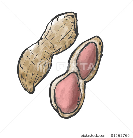 Japanese style hand-drawn illustration of peanuts 81563766