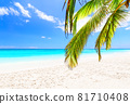 Coconut palm leaves against blue sky and beautiful beach in Punta Cana, Dominican Republic. 81710408