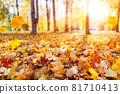 Autumn landscape, beautiful city park with fallen yellow leaves. 81710413