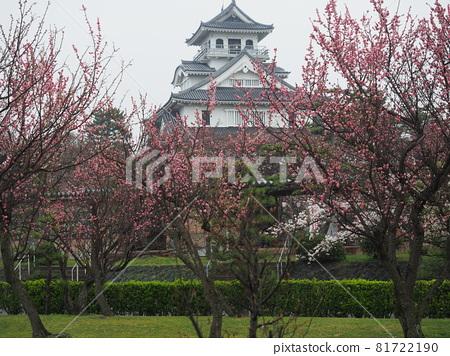nagahama, cherry blossom, cherry tree 81722190