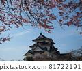nagahama, cherry blossom, cherry tree 81722191