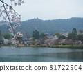 kyoto, cherry blossom, cherry tree 81722504