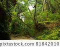 夏末的森林 81842010