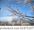 Canadian Ice Storm Rain Ice and Rainbow 81873207