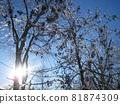 캐나다 아이스 스톰 아름다운 우빙 81874309