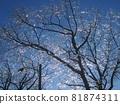 캐나다 아이스 스톰 아름다운 우빙 81874311