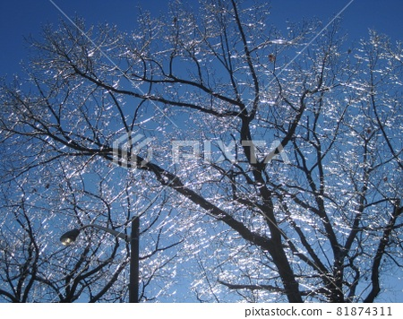 Canada Ice Storm Beautiful glaze 81874311