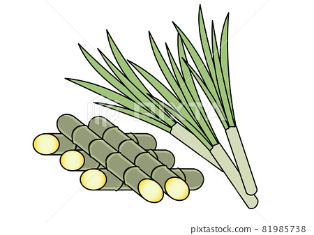 Illustration of sugar cane, which is also a raw material for bioplastics and biomass (related to vegetable materials, eco, and SDGs) 81985738