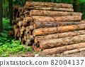 Cut down cedar wood image 82004137