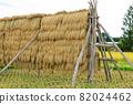 Hasakake rice harvesting, natural drying, Akita prefecture agriculture 82024462