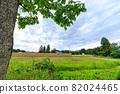 Hasakake rice harvesting, natural drying, Akita prefecture agriculture 82024465