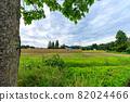 Hasakake rice harvesting, natural drying, Akita prefecture agriculture 82024466