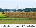 Hasakake rice harvesting, natural drying, Akita prefecture agriculture 82024467