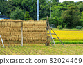 Hasakake rice harvesting, natural drying, Akita prefecture agriculture 82024469