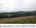 Spruce trees if fog 82073382