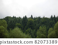 Spruce trees if fog 82073389
