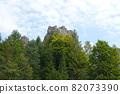 Spruce trees if fog 82073390
