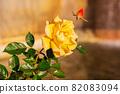 愛知名古屋的秋天:東山動植物園的美麗玫瑰 82083094