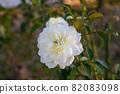 愛知名古屋的秋天:東山動植物園的美麗玫瑰 82083098