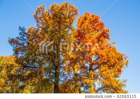 아이치 나고야의 가을 단풍의 히가시야마 동식물원 82083115