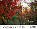 愛知名古屋東山動植物園的秋葉 82083204